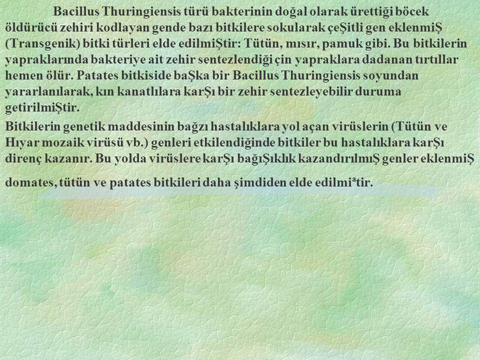 Bacillus Thuringiensis türü bakterinin doğal olarak ürettiği böcek öldürücü zehiri kodlayan gende bazı bitkilere sokularak çeŞitli gen eklenmiŞ (Transgenik) bitki türleri elde edilmiŞtir: Tütün, mısır, pamuk gibi. Bu bitkilerin yapraklarında bakteriye ait zehir sentezlendiği çin yapraklara dadanan tırtıllar hemen ölür. Patates bitkiside baŞka bir Bacillus Thuringiensis soyundan yararlanılarak, kın kanatlılara karŞı bir zehir sentezleyebilir duruma getirilmiŞtir.