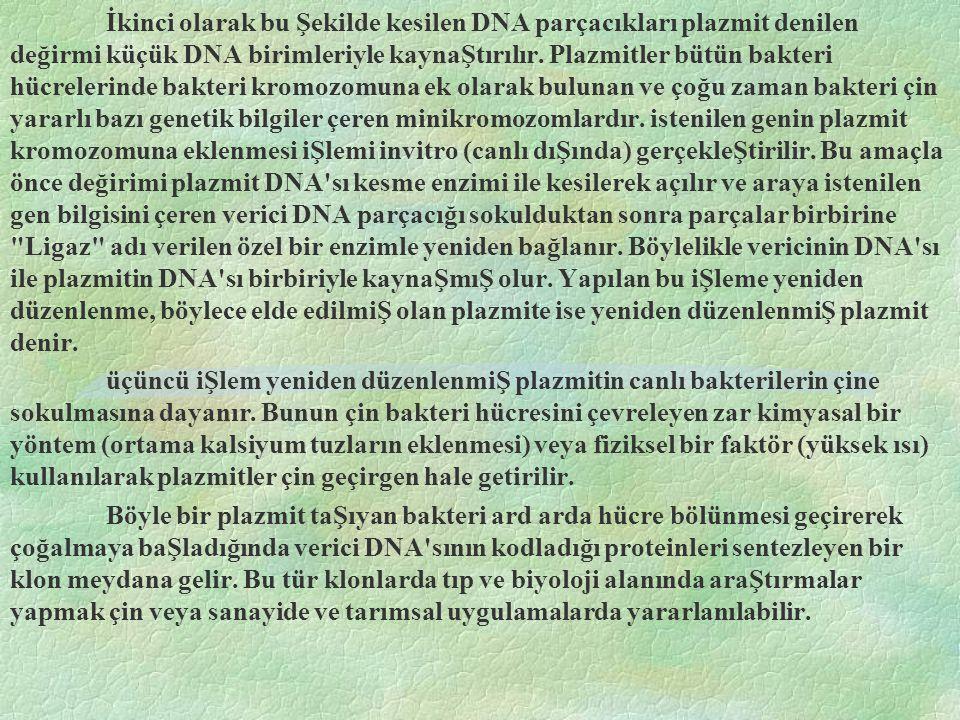 İkinci olarak bu Şekilde kesilen DNA parçacıkları plazmit denilen değirmi küçük DNA birimleriyle kaynaŞtırılır. Plazmitler bütün bakteri hücrelerinde bakteri kromozomuna ek olarak bulunan ve çoğu zaman bakteri çin yararlı bazı genetik bilgiler çeren minikromozomlardır. istenilen genin plazmit kromozomuna eklenmesi iŞlemi invitro (canlı dıŞında) gerçekleŞtirilir. Bu amaçla önce değirimi plazmit DNA sı kesme enzimi ile kesilerek açılır ve araya istenilen gen bilgisini çeren verici DNA parçacığı sokulduktan sonra parçalar birbirine Ligaz adı verilen özel bir enzimle yeniden bağlanır. Böylelikle vericinin DNA sı ile plazmitin DNA sı birbiriyle kaynaŞmıŞ olur. Yapılan bu iŞleme yeniden düzenlenme, böylece elde edilmiŞ olan plazmite ise yeniden düzenlenmiŞ plazmit denir.