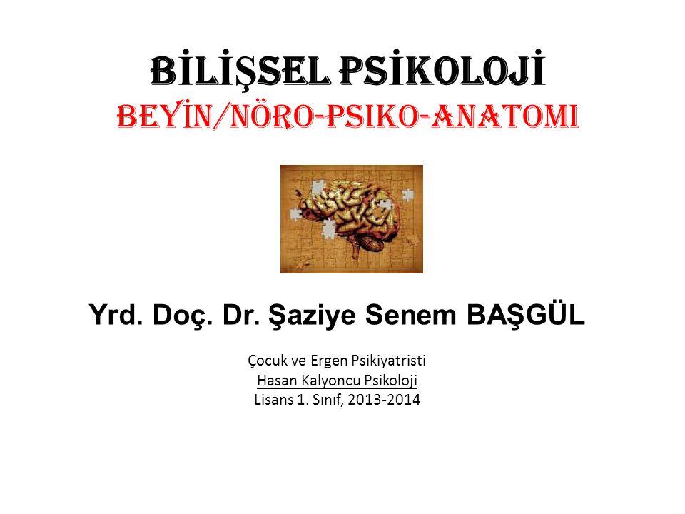 BİLİŞSEL PSİKOLOJİ BEYİN/Nöro-Psiko-Anatomi