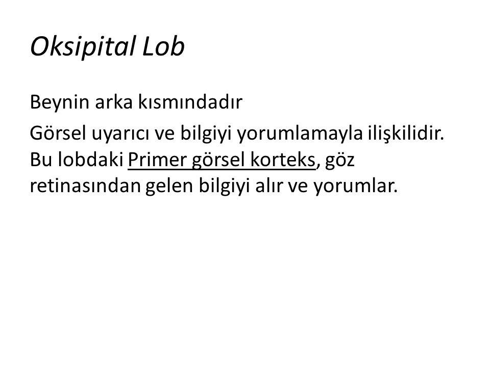 Oksipital Lob