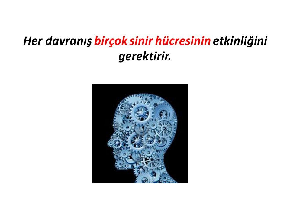 Her davranış birçok sinir hücresinin etkinliğini gerektirir.