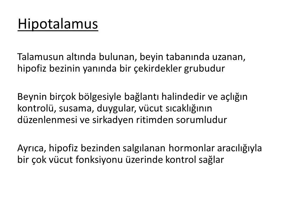 Hipotalamus Talamusun altında bulunan, beyin tabanında uzanan, hipofiz bezinin yanında bir çekirdekler grubudur.