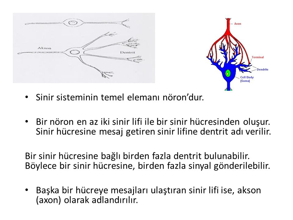 Sinir sisteminin temel elemanı nöron'dur.