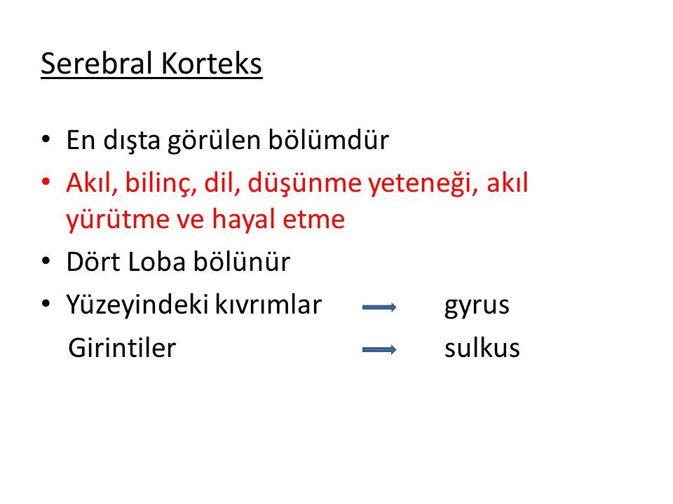 Serebral Korteks En dışta görülen bölümdür