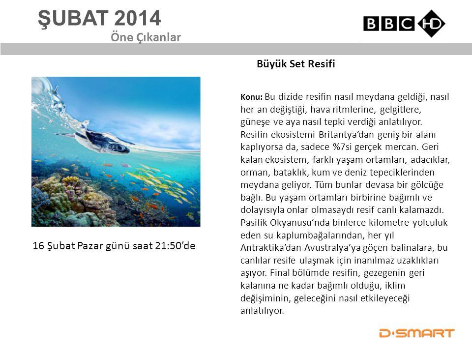 ŞUBAT 2014 Öne Çıkanlar Büyük Set Resifi