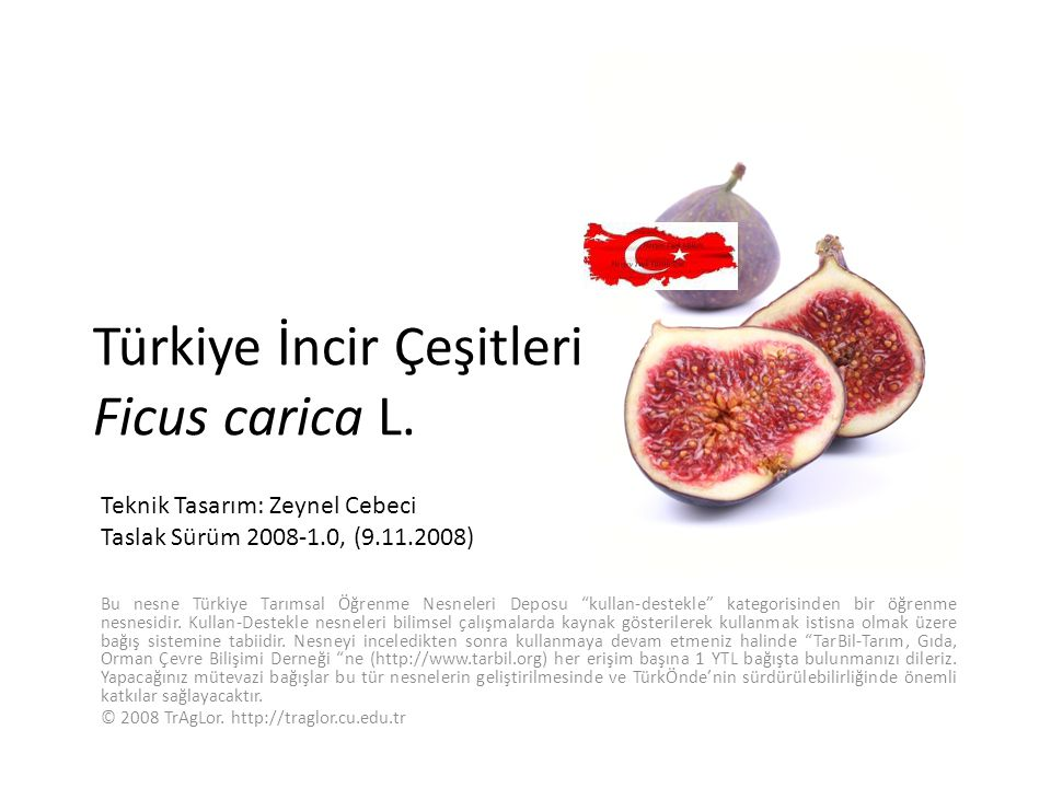 Türkiye İncir Çeşitleri Ficus carica L.