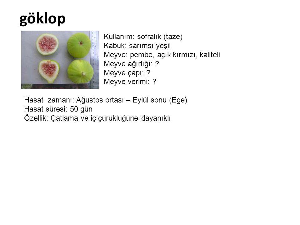 göklop Kullanım: sofralık (taze) Kabuk: sarımsı yeşil