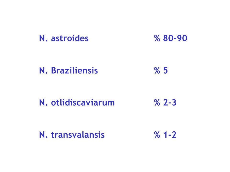 N. astroides % 80-90 N. Braziliensis % 5 N. otlidiscaviarum % 2-3 N. transvalansis % 1-2