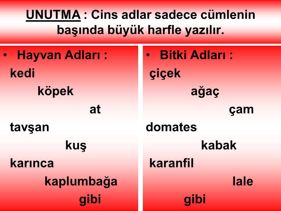 UNUTMA : Cins adlar sadece cümlenin başında büyük harfle yazılır.