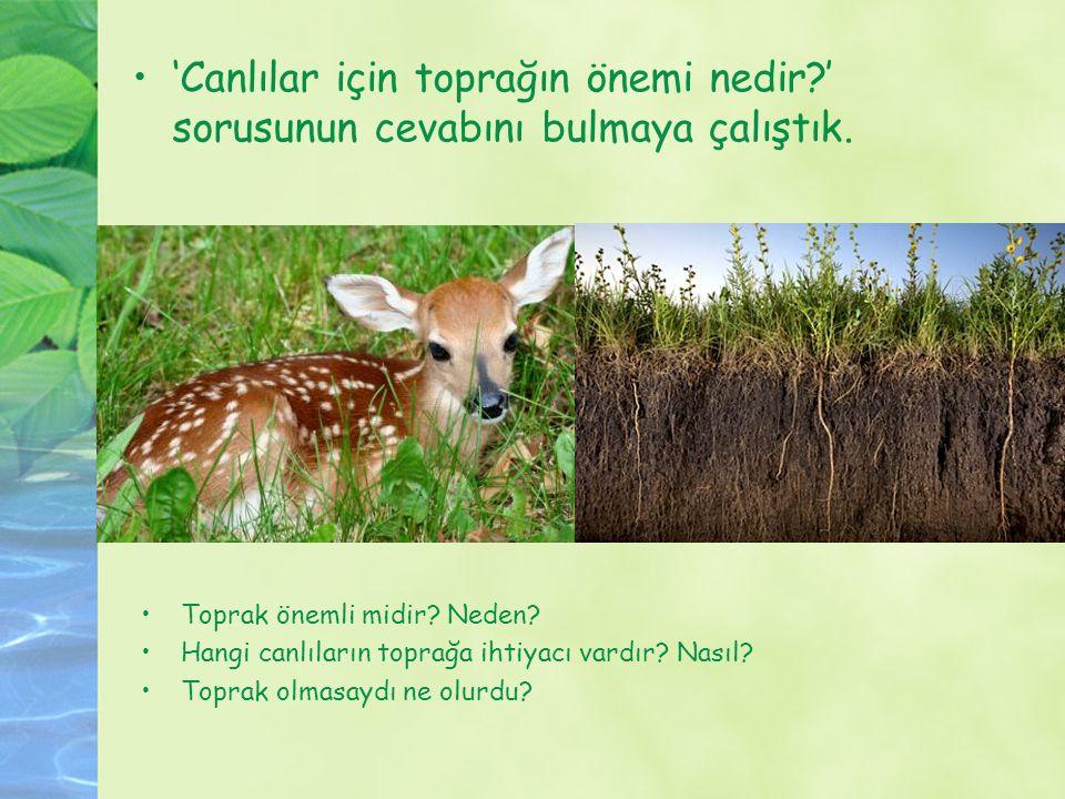 'Canlılar için toprağın önemi nedir