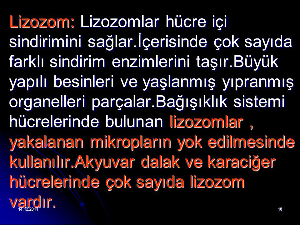 Lizozom: Lizozomlar hücre içi sindirimini sağlar