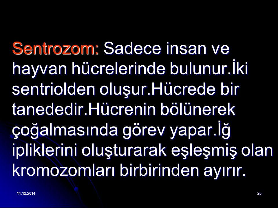 Sentrozom: Sadece insan ve hayvan hücrelerinde bulunur