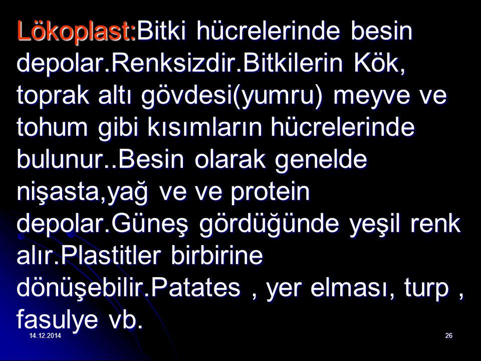 Lökoplast:Bitki hücrelerinde besin depolar. Renksizdir