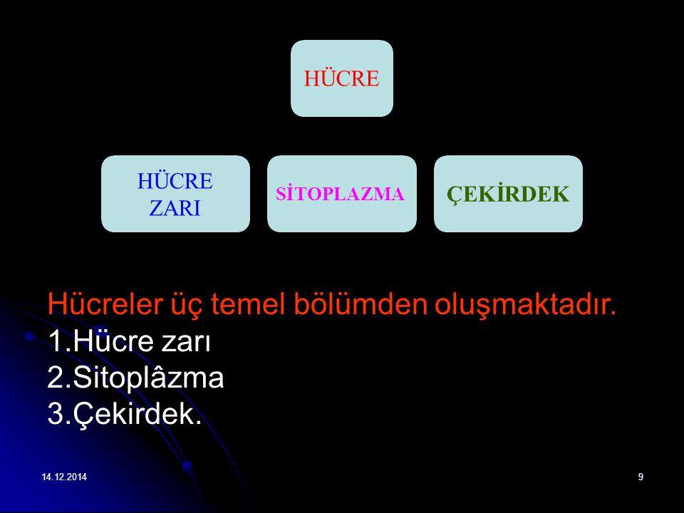 Hücreler üç temel bölümden oluşmaktadır. Hücre zarı Sitoplâzma