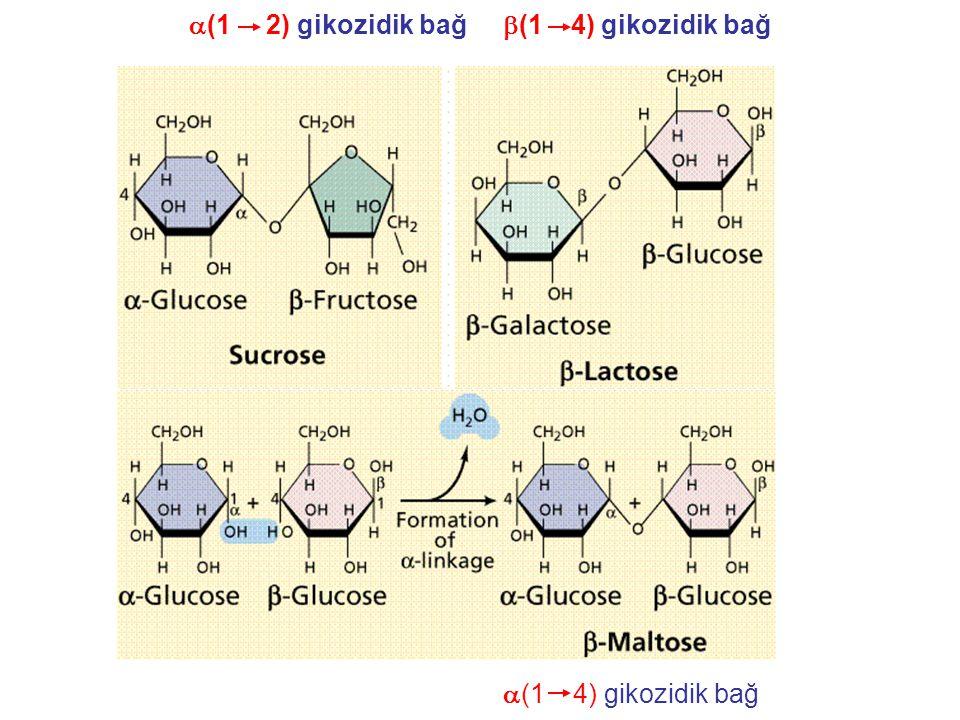 a(1 2) gikozidik bağ b(1 4) gikozidik bağ