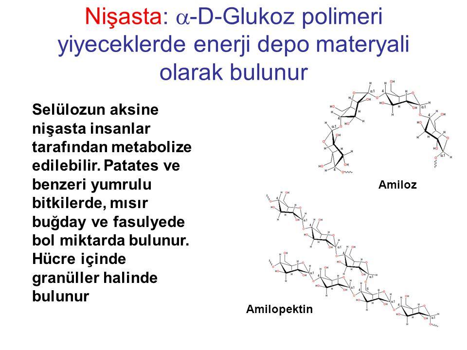 Nişasta: a-D-Glukoz polimeri yiyeceklerde enerji depo materyali olarak bulunur