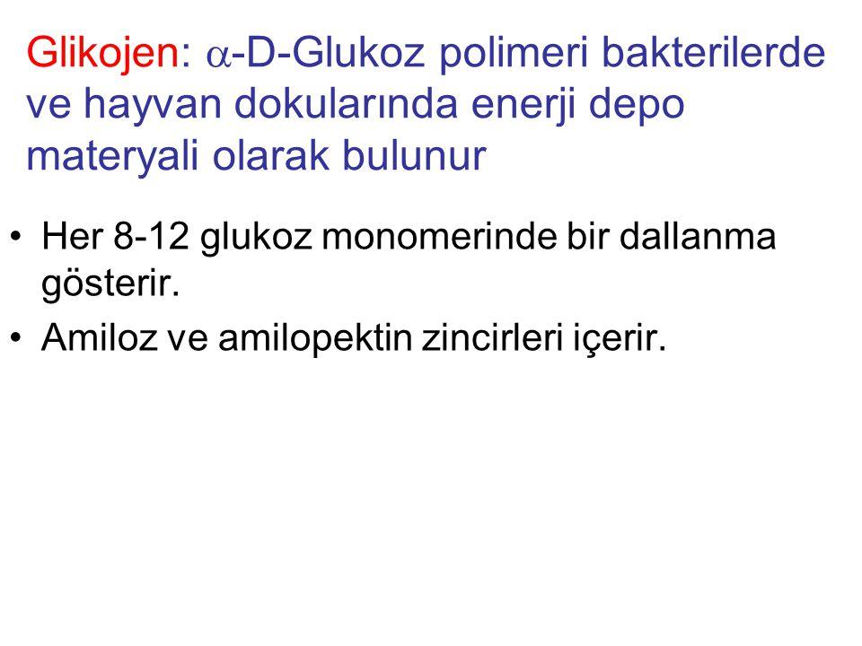 Glikojen: a-D-Glukoz polimeri bakterilerde ve hayvan dokularında enerji depo materyali olarak bulunur