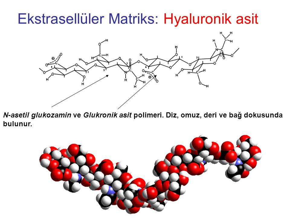 Ekstrasellüler Matriks: Hyaluronik asit