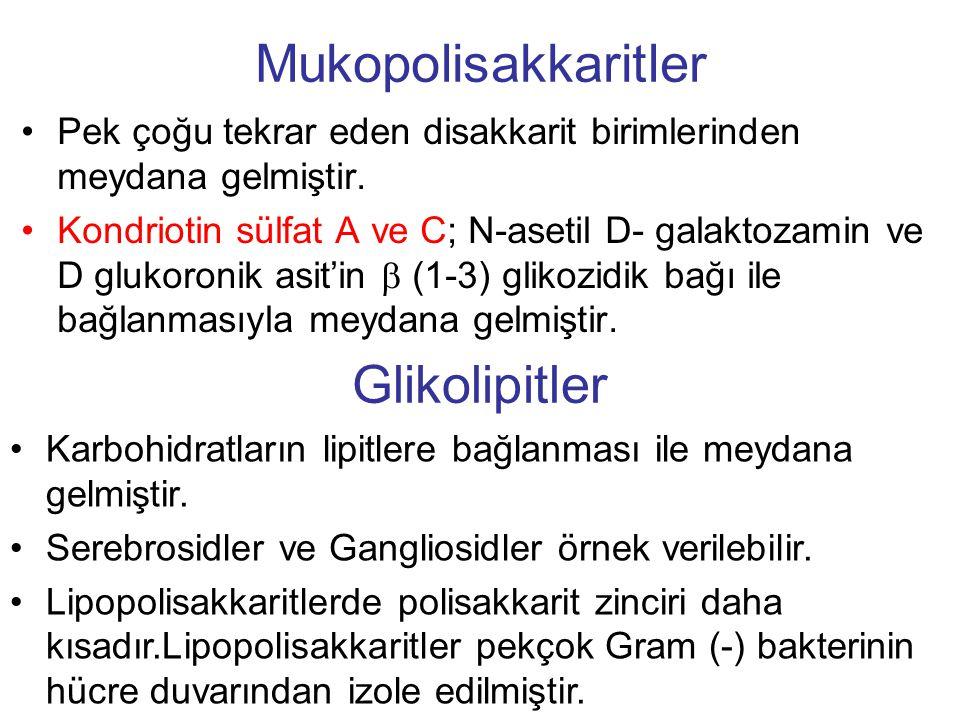 Mukopolisakkaritler Glikolipitler