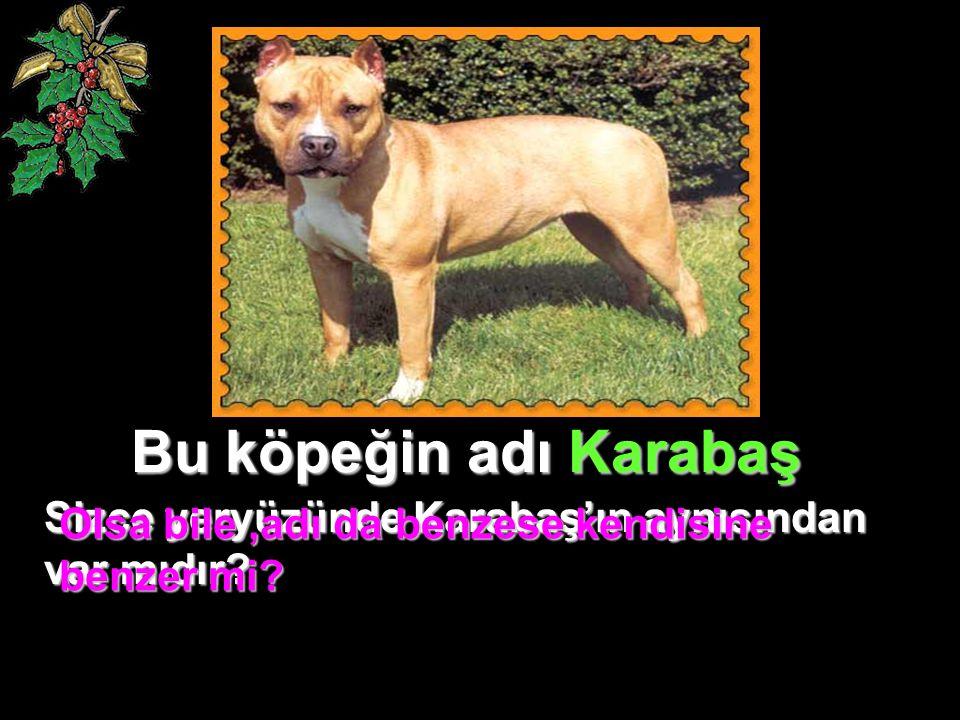 Bu köpeğin adı Karabaş Sizce yeryüzünde Karabaş'ın aynısından var mıdır.