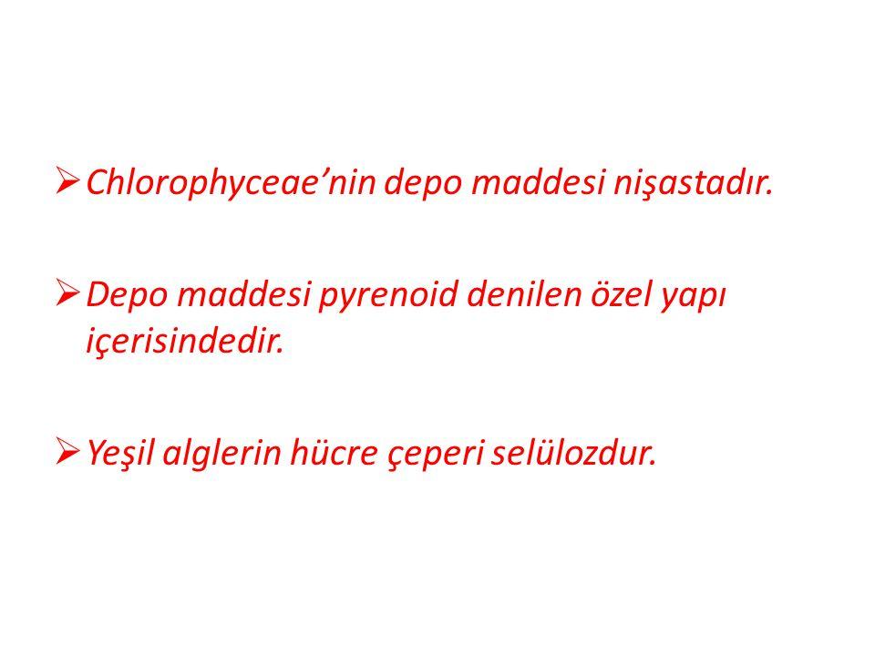 Chlorophyceae'nin depo maddesi nişastadır.