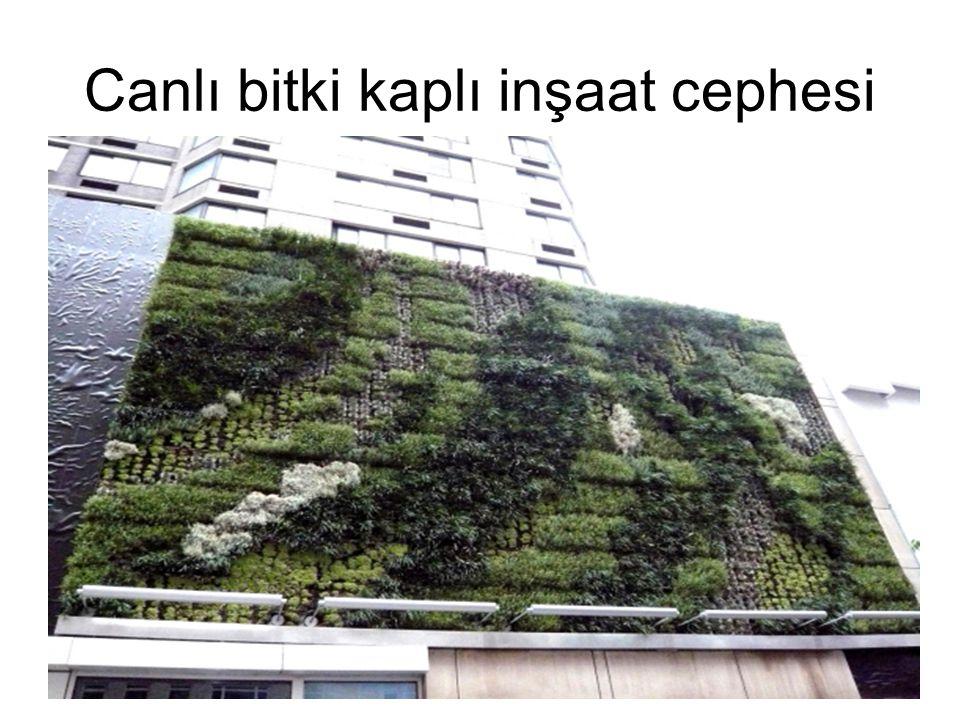 Canlı bitki kaplı inşaat cephesi