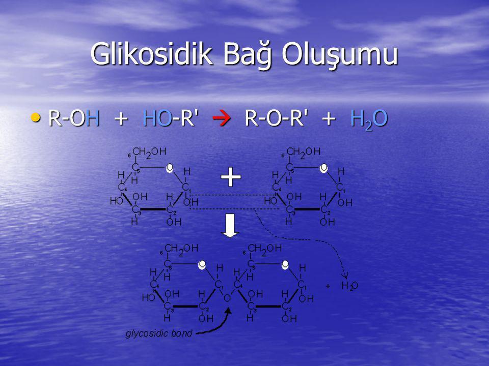 Glikosidik Bağ Oluşumu
