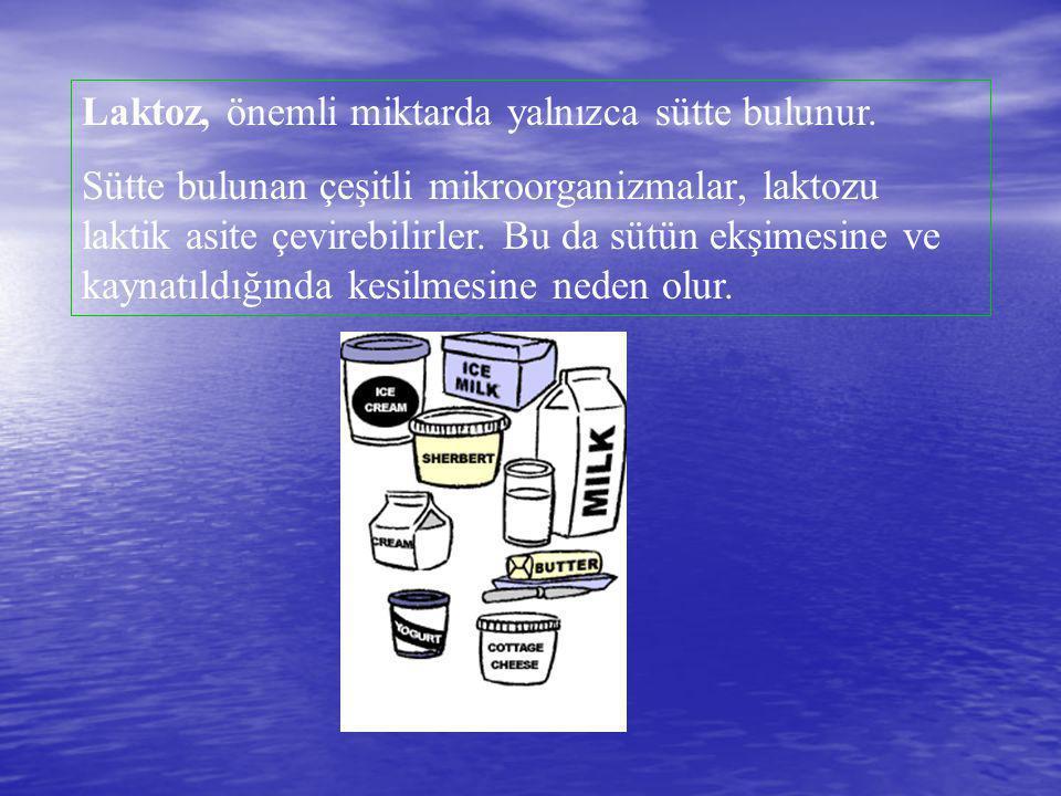 Laktoz, önemli miktarda yalnızca sütte bulunur.