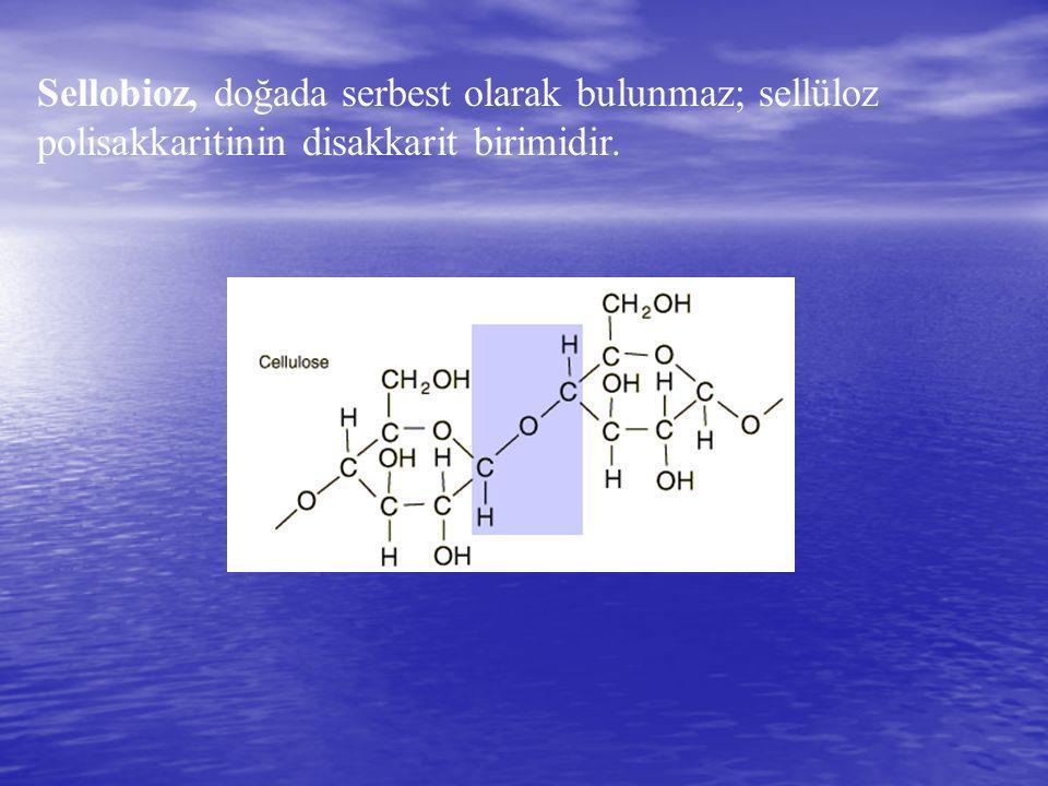 Sellobioz, doğada serbest olarak bulunmaz; sellüloz polisakkaritinin disakkarit birimidir.