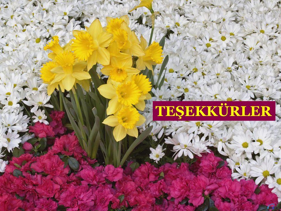 TEŞEKKÜRLER Ecz.SİNAN ÖZKAN, Mayıs 2009