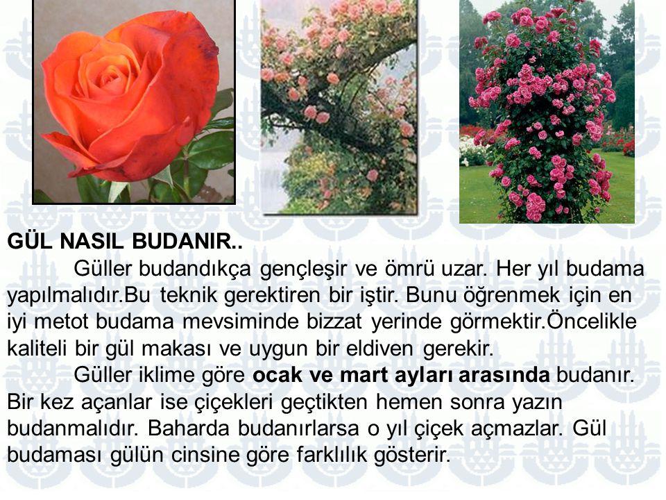 GÜL NASIL BUDANIR..