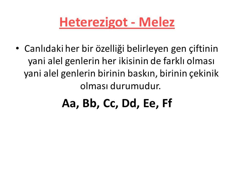 Heterezigot - Melez Aa, Bb, Cc, Dd, Ee, Ff