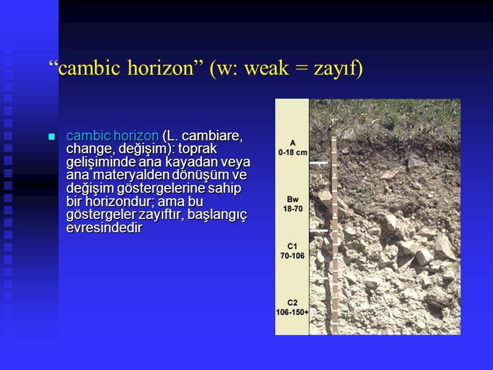cambic horizon (w: weak = zayıf)