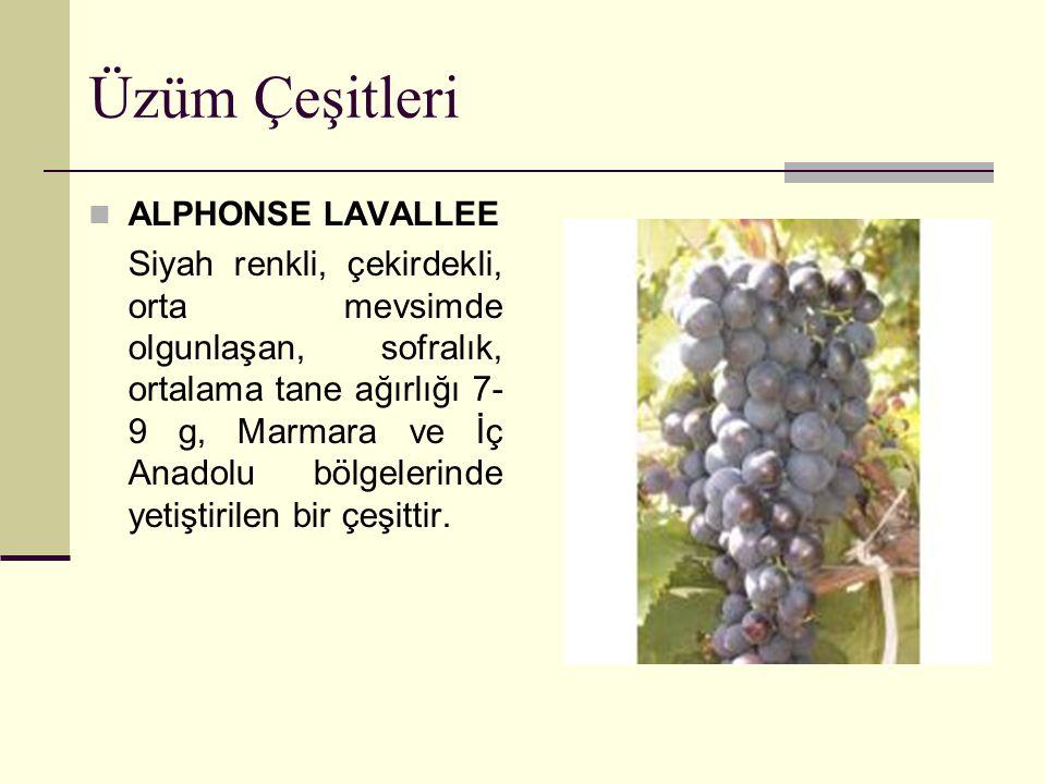 Üzüm Çeşitleri ALPHONSE LAVALLEE.