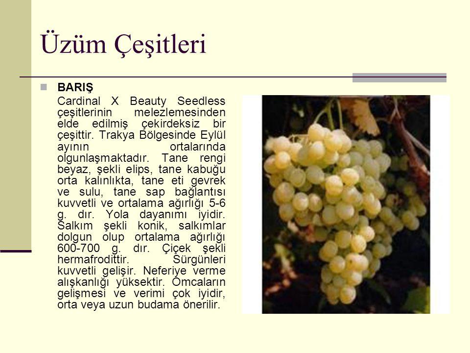 Üzüm Çeşitleri BARIŞ.