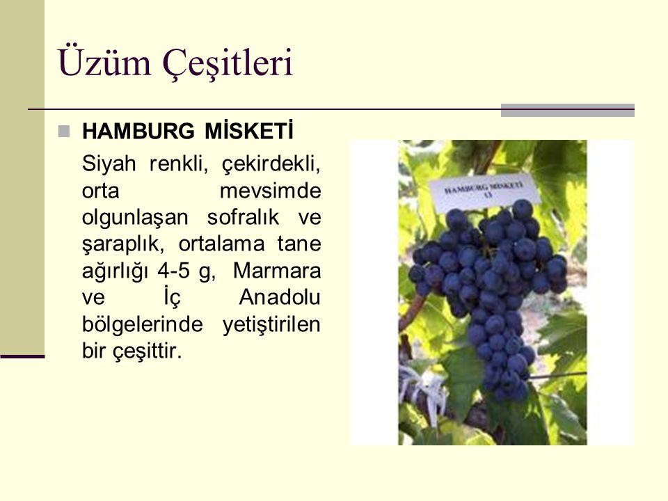 Üzüm Çeşitleri HAMBURG MİSKETİ