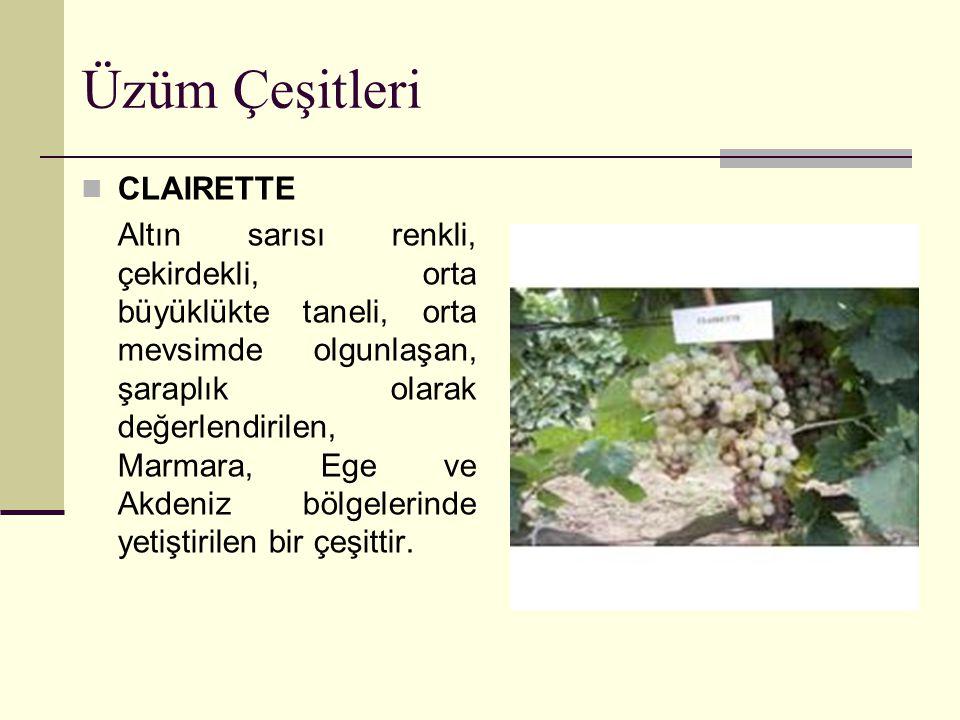 Üzüm Çeşitleri CLAIRETTE