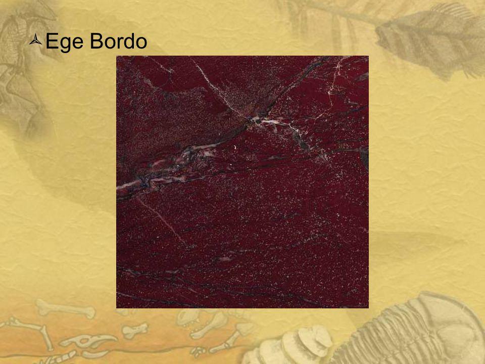 1616 Ege Bordo