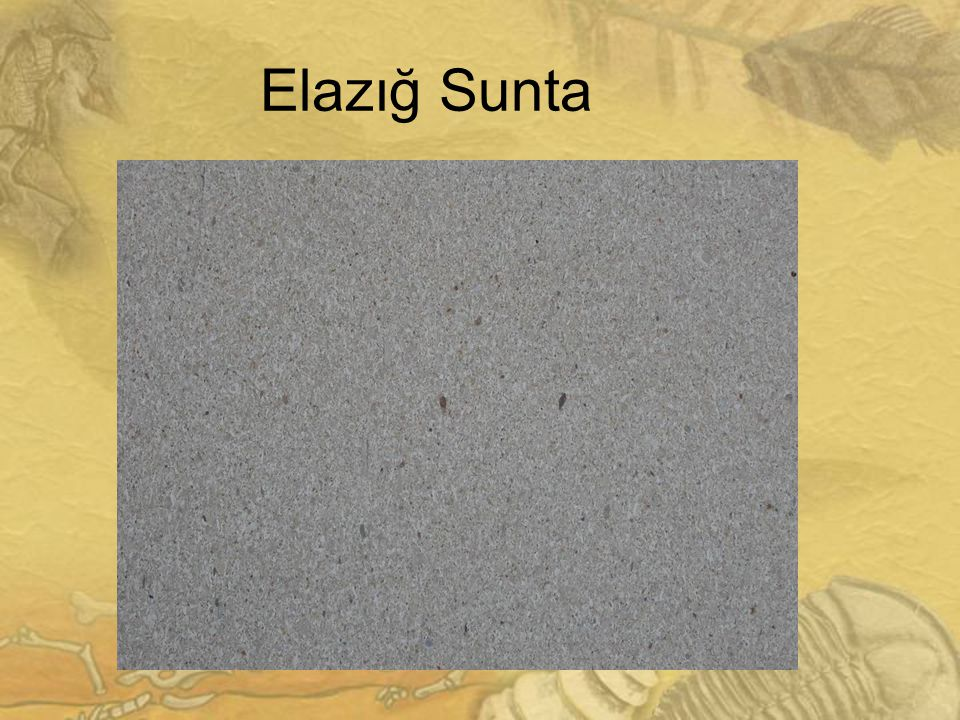 2828 Elazığ Sunta