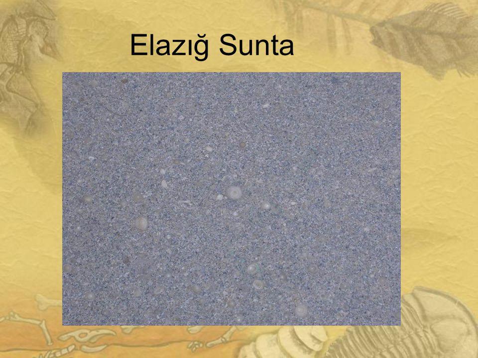 2929 Elazığ Sunta