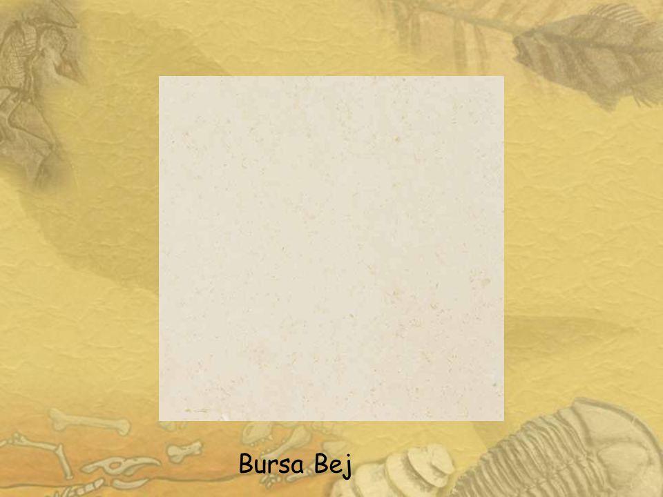 9 Bursa Bej