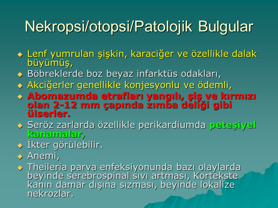 Nekropsi/otopsi/Patolojik Bulgular
