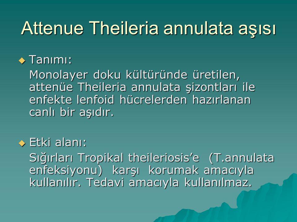 Attenue Theileria annulata aşısı