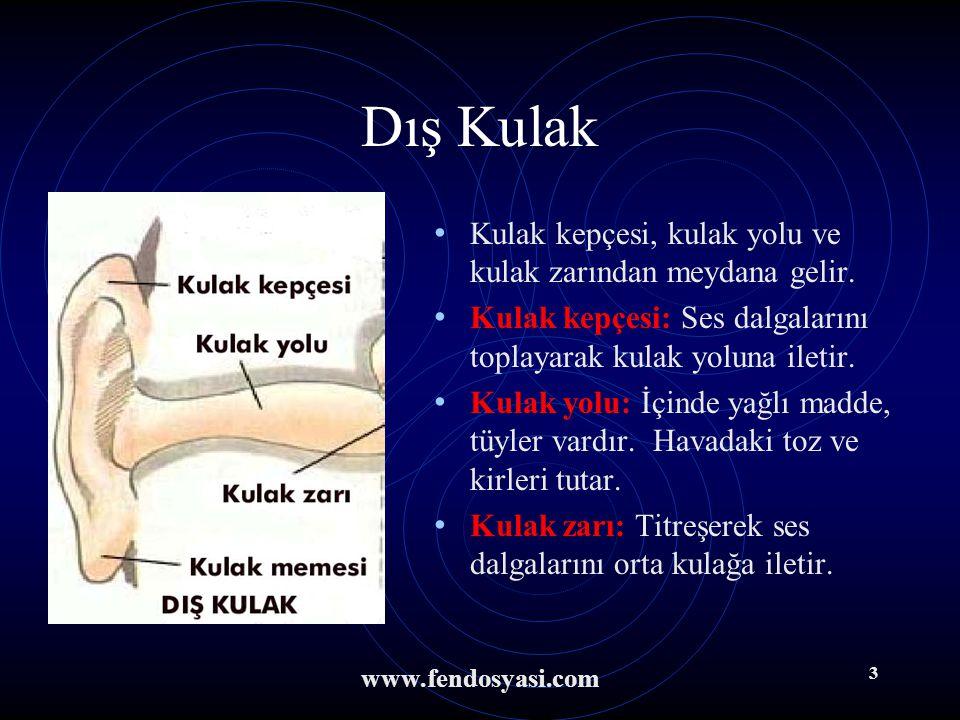 Dış Kulak Kulak kepçesi, kulak yolu ve kulak zarından meydana gelir.