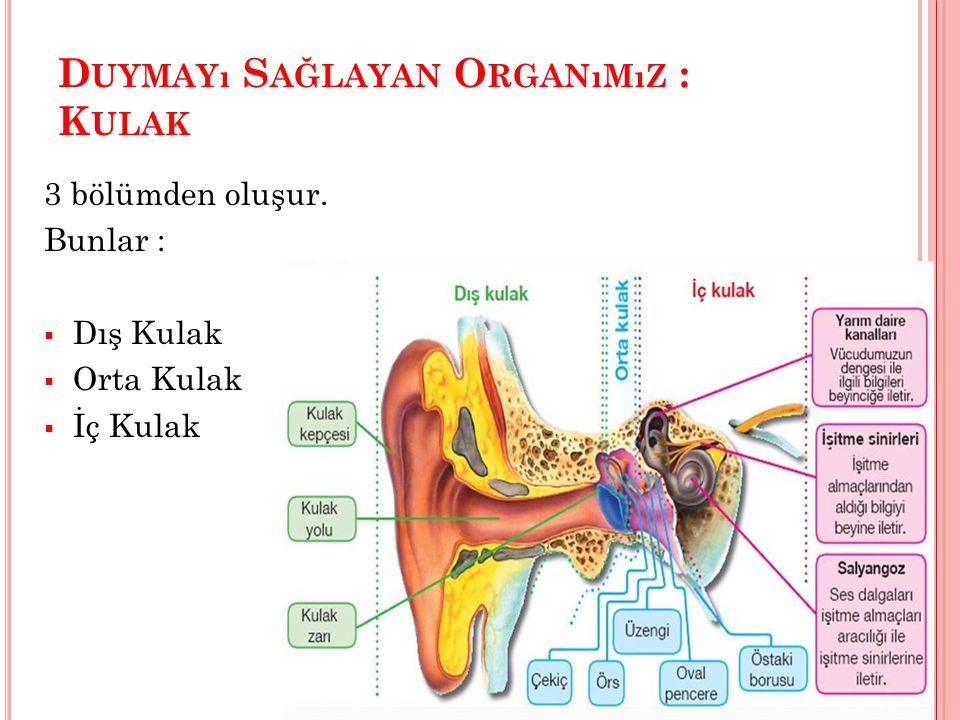 Duymayı Sağlayan Organımız : Kulak