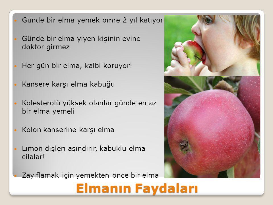 Elmanın Faydaları Günde bir elma yemek ömre 2 yıl katıyor