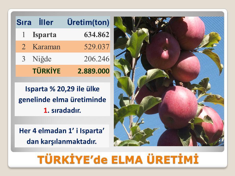 TÜRKİYE'de ELMA ÜRETİMİ
