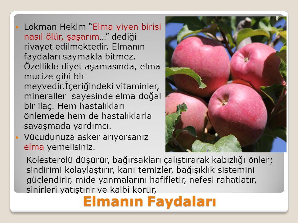 Lokman Hekim Elma yiyen birisi nasıl ölür, şaşarım… dediği rivayet edilmektedir. Elmanın faydaları saymakla bitmez. Özellikle diyet aşamasında, elma mucize gibi bir meyvedir.İçeriğindeki vitaminler, mineraller sayesinde elma doğal bir ilaç. Hem hastalıkları önlemede hem de hastalıklarla savaşmada yardımcı.
