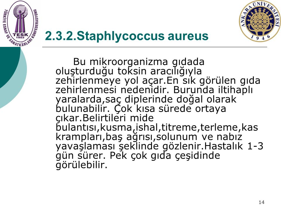 2.3.2.Staphlycoccus aureus