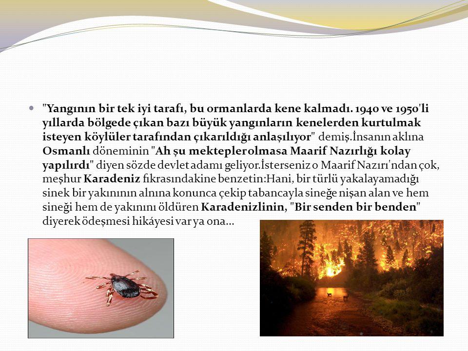Yangının bir tek iyi tarafı, bu ormanlarda kene kalmadı